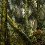giants, forest, huntsman, Jared Shear, art, digital, fantasy
