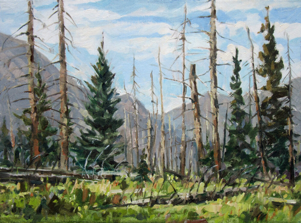 Jared Shear, Montana, plein air, art, painting, wilderness, oil on linen, burn, trees, Bob Marshall,